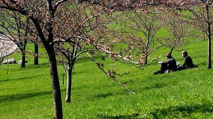 Kaune gali suvešėti pavojinga sodų ir miškų liga