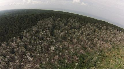 Aplinkosaugininkai svarsto neatkurti Juodkrantės sengirės
