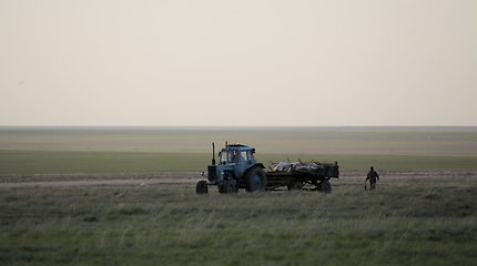 Kazachstane paslaptingai nugaišo pusė nykstančių saigų populiacijos