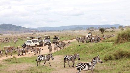 Serengetis – safarių rojus