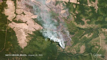 JK skirs 10 mln. svarų gaisrų nuniokotų Amazonijos miškų atkūrimui