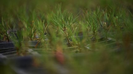 Tyrimas parodė: su klimato krize galima kovoti, tačiau reikia tučtuojau gausiai sodinti medžius