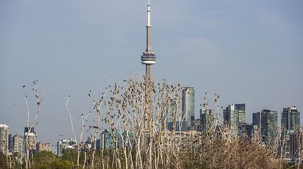 Kanada suteiks leidimą nuolat gyventi šalyje 90 tūkst. studentų ir užsienio darbuotojų