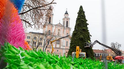 Kaune statoma Kalėdų eglė