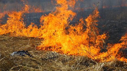 Šiemet ypač padaugėjo gaisrų atvirosiose teritorijose, išdegė 2833 hektarai ploto