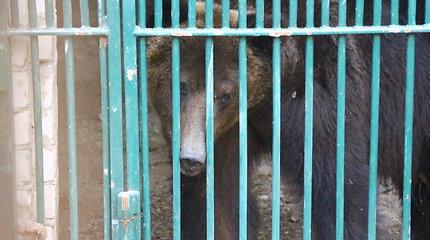 N.Zobovo meška išgabenta į Lietuvos zoologijos sodą