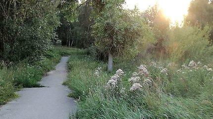 Remontuose užsikasę Šiauliai paskendo ir nenušienautoje žolėje