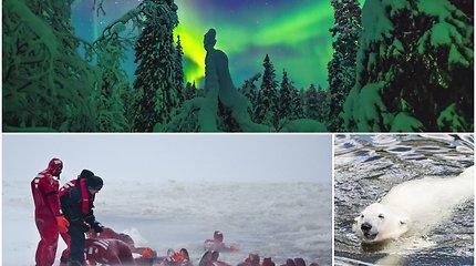 Pramogos, kokių gali sugalvoti tik suomiai: Šiaurės pašvaistė spaudžiant speigui ir vizitas į baltojo lokio guolį