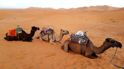 Kelionių po Maroką akimirkos
