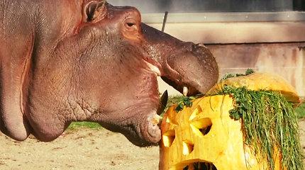 Šiurpiausiai metų nakčiai jau pasiruošė Belgijos zoologijos sodas