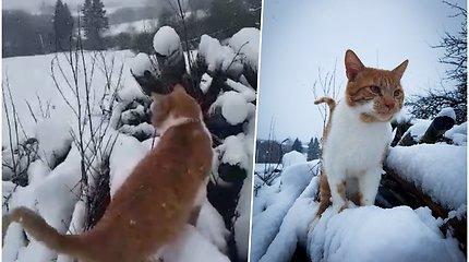 Gegužės mėnesį sulaukėme pusnių – savo akimis negalėjo patikėti net katinas Leopoldas