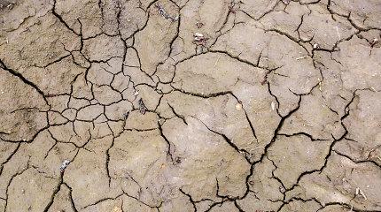 Klimatologas: karščio bangos Lietuvoje dažnėja ir intensyvėja dėl klimato kaitos