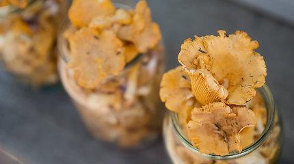 Prisirinkusiems ar nusipirkusiems voveraičių – 15 receptų: nuo sriubos iki picos