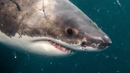 Karibuose prie Šv. Martyno salos – pirmasis mirtinas ryklio užpuolimas