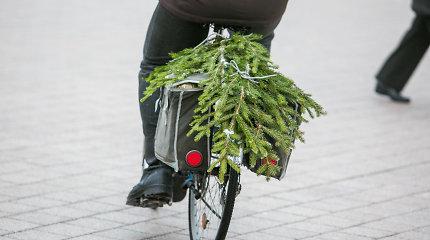 Miškininkai pradeda dalyti eglių šakas Kalėdoms