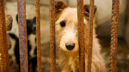 Gyvūnų prieglaudos įkainiai: už valandai priglaustą pasiklydusį šunį – 50 eurų
