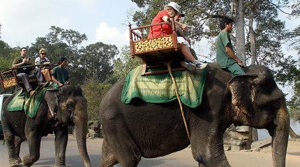 Angkoro šventykloje turistams uždrausta jodinėti ant dramblių
