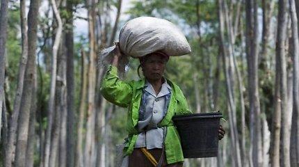El Ninjo dar paspartins Indonezijos miškų nykimą