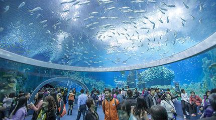 Kinijoje atidarytas penkis Guinnesso rekordus pagerinęs didžiausias pasaulyje akvariumas