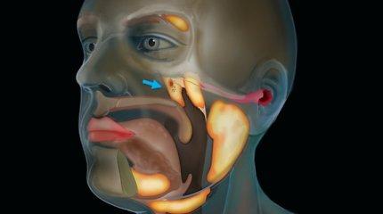 Mokslininkai žmogaus galvos centre aptiko naują, iki šiol nematytą organą