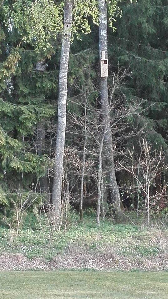 Pelėdžiukus radusios Alinos nuotr. /Mažeikiškių skubiai iškeltas inkilas pelėdoms (dešinėje)