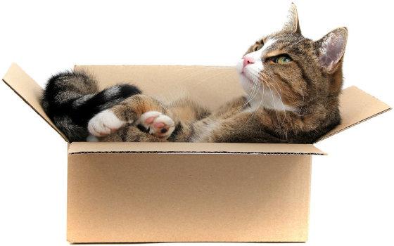 Fotolia nuotr./Katė dėžėje