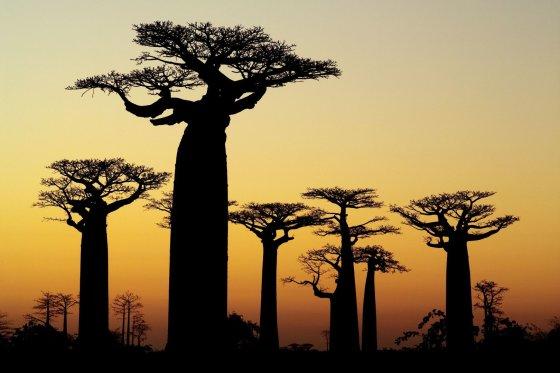 123rf.com nuotr./Madagaskaras