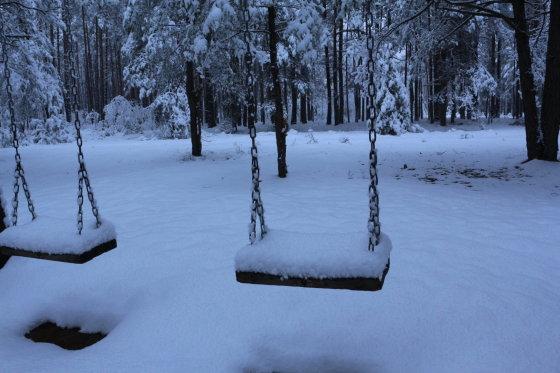 Lapkričio sniegas Dzūkijos miške