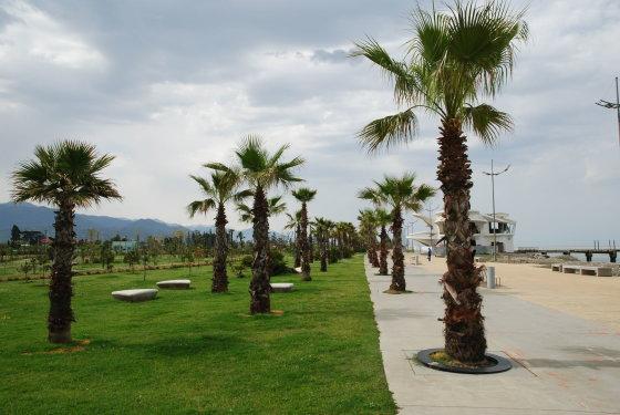 Audriaus Ožalo nuotr./Jei reikia žiupsnio egzotikos, Batumis pasiruošęs tai pasiūlyti palmių pavidalu