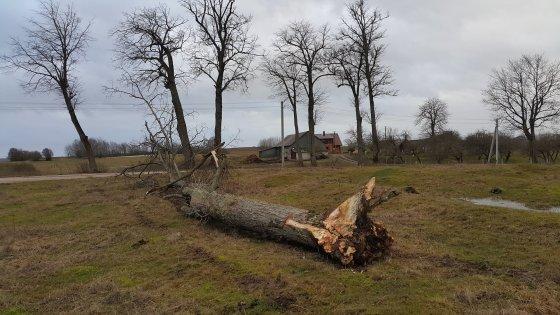 Nojaus nuotr./Uraganinis vėjas pajūryje vartė medžius