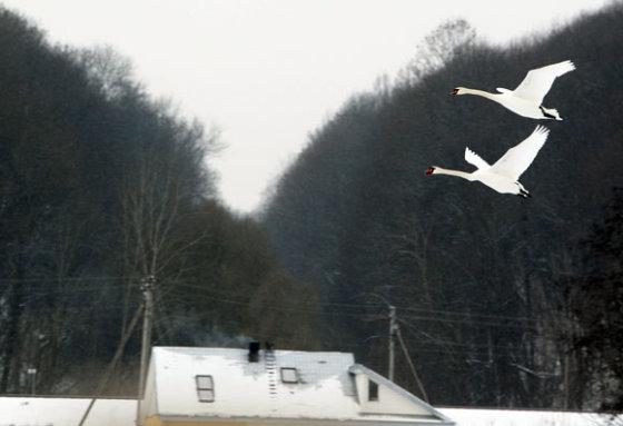 Eriko Ovčarenko/15min.lt nuotr./Paukščiai žiemą