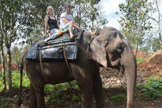 Kvaila turistinė pramoga – pasijodinėjimas ant dramblių