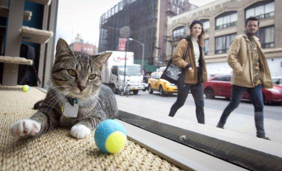 """""""Reuters""""/""""Scanpix"""" nuotr./Kačių kavinė Niujorke"""