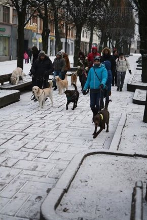 Laisvės al., Kaunas