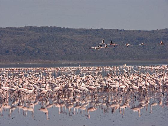 Wikimedia.org/Gamtos išdaigos – rožiniai pasaulio ežerai
