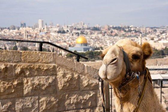 123rf.com nuotr./Šaltuoju metų laiku keliauti galima ne tik į Egiptą