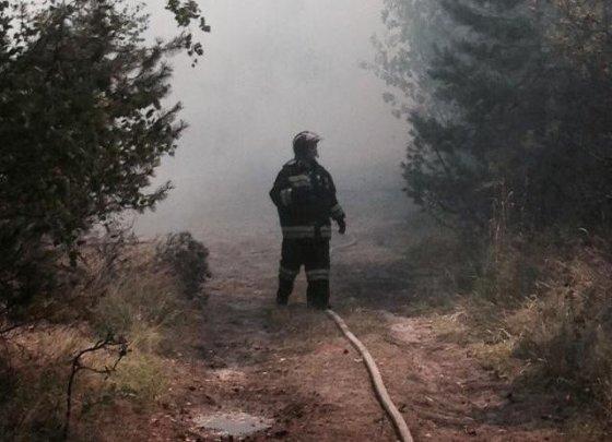 Rusijos ugniagesiai gesina Kuršių neriją/kaliningrad.ru nuotr.