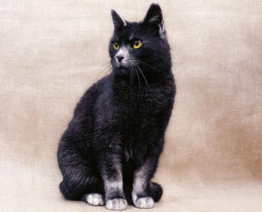 Fotolia nuotr./Korato katė