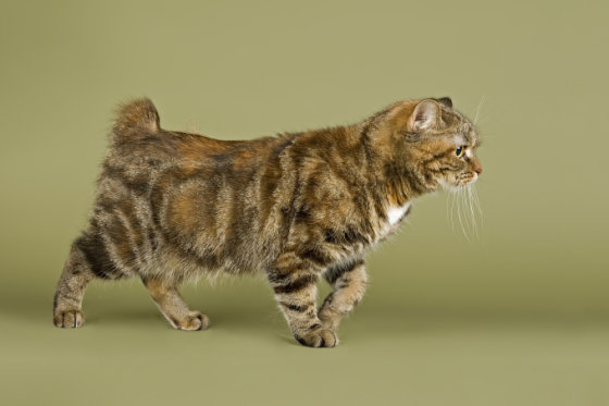 Fotolia nuotr./Mankso katė