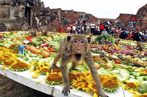 """""""Monkey Buffet Festival"""" / """"BUMS on BEDS"""" archyvo nuotr."""
