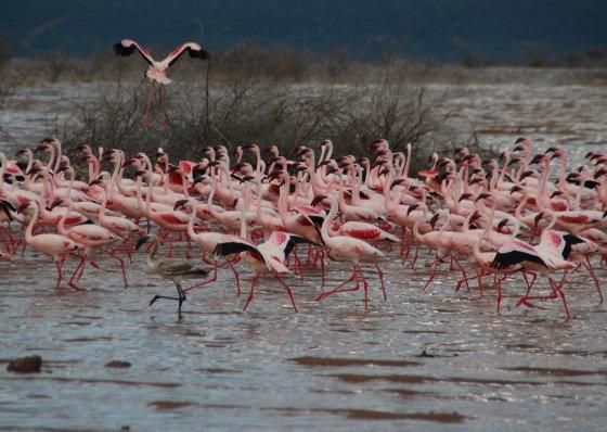 Eglės Digrytės nuotr./Bogorijos ežeras