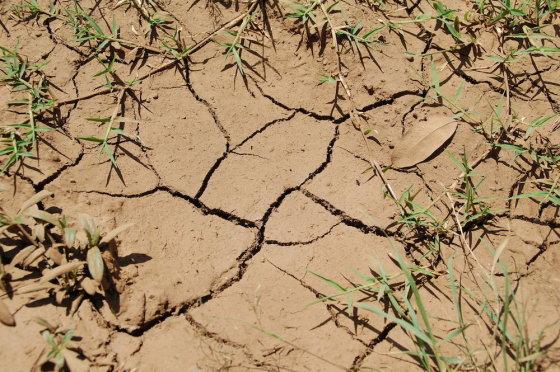 Eglės Digrytės nuotr./Taip kai kur atrodo Kenijos žemė