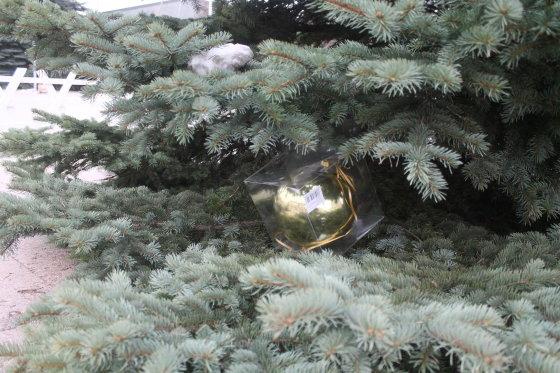 Tomo Markelevičiaus nuotr./Kalėdų eglė Panevėžyje