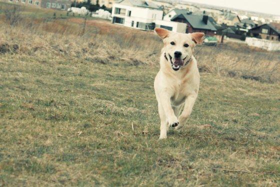 Šuniškas žaidimas: gudruolė Alegria pažįsta skaičius