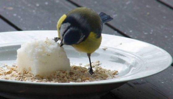 Peter Claus, Flickr.com/Ką valgyti žiemą?