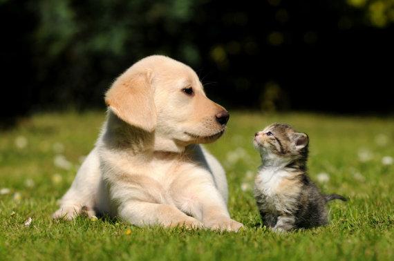 123rf.com nuotr./Šuo ir katė