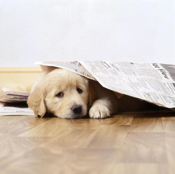 Vida Press nuotr./Šuo