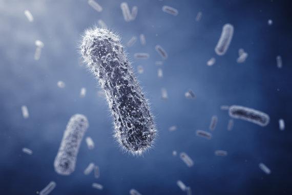 Fotolia nuotr./Bakterijos