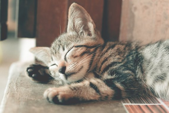 """""""PetCity"""" nuotr./Katė"""