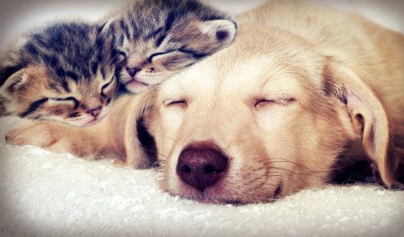 """""""Fotolia"""" nuotr./Šuniukas ir kačiukai"""